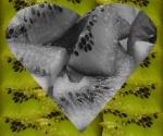 kiwi & art - liebe