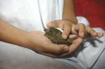 child with little bird